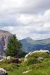 canvas print picture - Dantercerpies in den Dolomiten