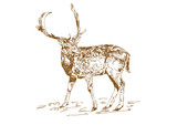 Vector vintage style engraved hand drawn deer animal hunting season. Forest deer with branchy horns in sketch style.