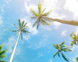 Palm trees against sunny blue sky with clouds - 261329990