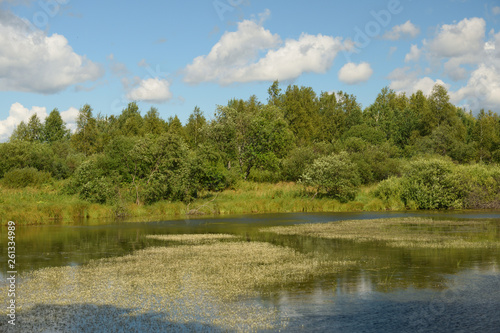 Landscape with forest lake