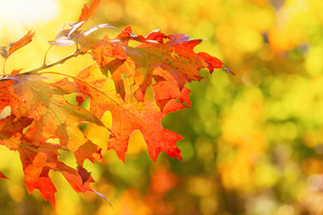 Colorful autumn foliage leaves on a tree branch
