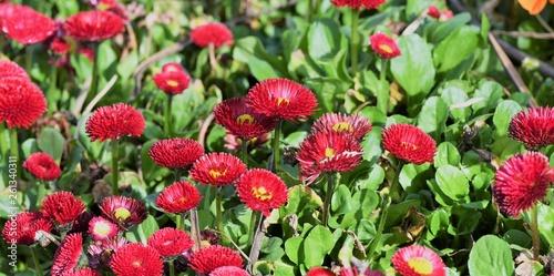 fleurs © rachid amrous