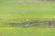canvas print picture - Storch beim fischen