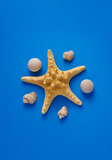 Summer holidays. Starfish, seashells on a blue background. Summer concept. Flat lay, top view, copy space - 261352385