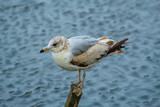 Seagull on post