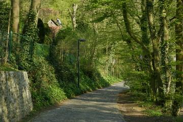Chemin ombragé longeant un mur en pierres vers un endroit plus éclairé au domaine de l'abbaye du Rouge-Cloître à Auderghem