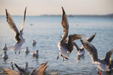 seagulls fly over the sea on a Sunny day