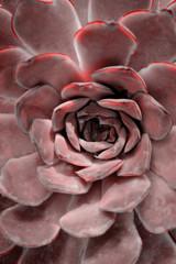 Cactus plant close up. Concept fashion art. Minimal surrealism. Tropical succulent leaves background.