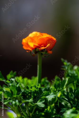 Flower in spring © Skyler