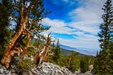 Mountain Vista - Bristlecone Pine Grove Trail - Great Basin National Park - Baker, Nevada