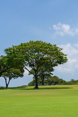 Tree on the green hill © hit1912