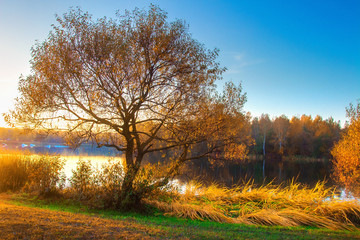 Scenic autumn landscape on river bank. Colorful tree on riverside