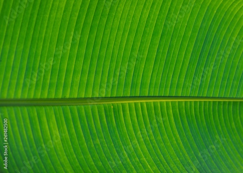 canvas print picture palmblatt grün
