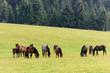 Horses on free pasture in the Carpathian mountains of Transylvania - 261493364