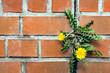dandelion between a brick wall