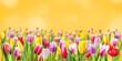 Sprind floral background for design - 261550795