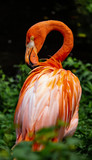 Flamingoes in Bronx Zoo