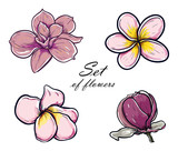 Vector Illustration set of beautiful magnolia and plumeria, drawing spring flowers isolated on white background