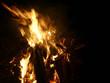 Knut Feuer - 261602571