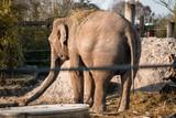 Elefant, tier, säugetier, wild lebende tiere, wild, natur, tierpark, big, safari
