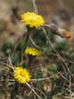 canvas print picture - Wildpflanzen in Bayern