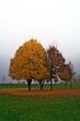 canvas print picture - Herbstlaub und Nebel