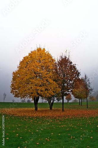 canvas print picture Herbstlaub und Nebel