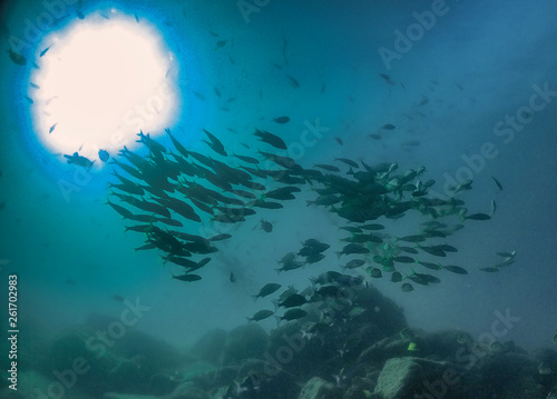 The silhouette of schooling fish in Baja California, Mexico
