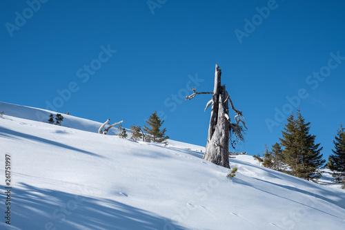 canvas print picture Jungfrauregion im Winter