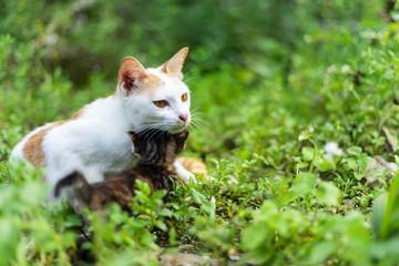 The lovely cat family in green garden