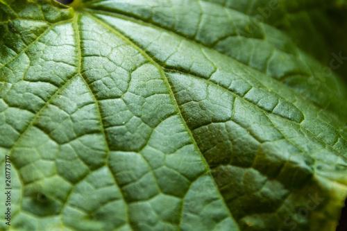 canvas print picture grünes Gurkenblatt mit grafischen Mustern