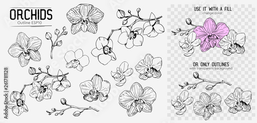 Orchids sketch. Hand drawn outline converted to vector. Isolated - 261781128