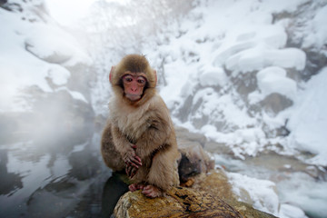 Monkey Japanese macaque, Macaca fuscata, red face portrait in the cold water with fog, animal in the nature habitat, Hokkaido, Japan. Wide angle lens photo with nature habitat.