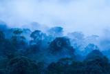 Widok z lotu ptaka, Antyczny tropikalny las w mgle, piękny ranku światło. Sztuka kształtowania lasu w porze deszczowej. Niebieski dźwięk. Park Narodowy Khao Yai. UNESCO World Heritage Site. Tajlandia.