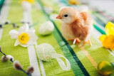 Easter chicken. Little orange chick walking among flowers and Easter eggs.