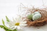 Painted robin eggs in straw nest with white daisy on bright background. High key. Copy space. AC