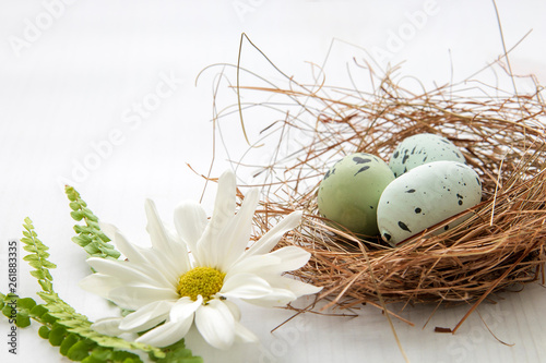 Painted robin eggs in straw nest with white daisy on bright background. High key. Copy space. AC - 261883335