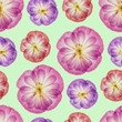 Poppy. Seamless pattern texture of flowers. Floral background, photo collage - 261886709