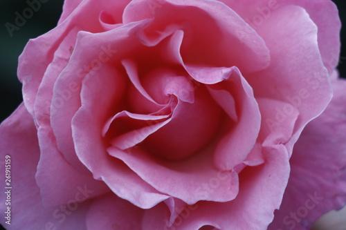 estas son diferentes tipos de flores ,fotos tomadas en diferentes lugares y jardines aqui podemos observar diferentes tipos,texturas ,colores y tamaños . - 261915159
