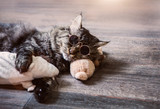real cat sleeping with rat doll and wear sunglasses