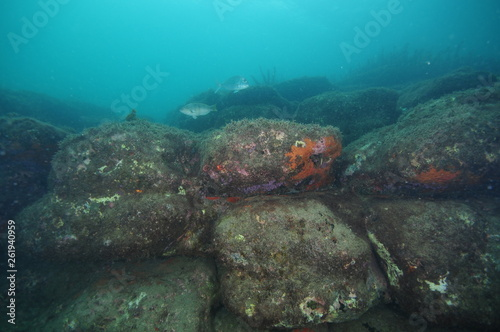 Underwater reef consisting of large boulders covered with short algae and colorful encrusting invertebrates on overhangs.