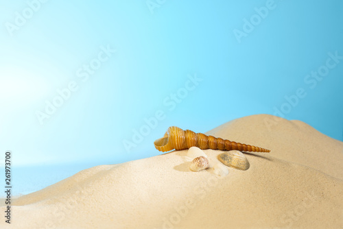 Close up view of shells on the sandy beach