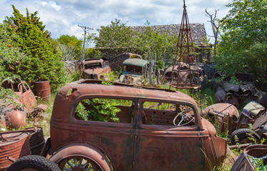 Vintage vehicles abandoned in a overgrown forest with grass