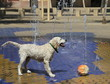 Dog at the fountains on a hot day on the street in Seville