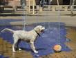Leinwandbild Motiv  Dog at the fountains on a hot day on the street in Seville