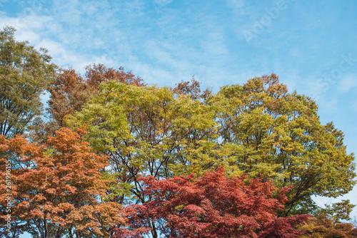 Autumn maple tree mountain in Korea