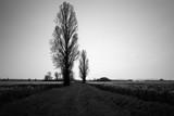 campagne en noir et blanc