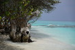 Maldives tree, indian Ocean, view from the beach