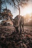 Hirsch zeigt seine Hörner