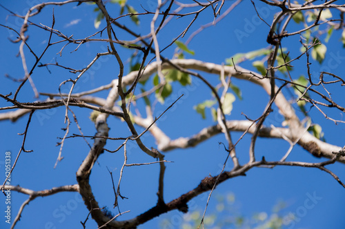 Branch of birch with green and yellow leaves on the background with blue sky. Early autumn  - 262051338